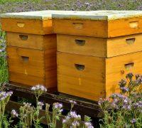 Leseni čebelji panj